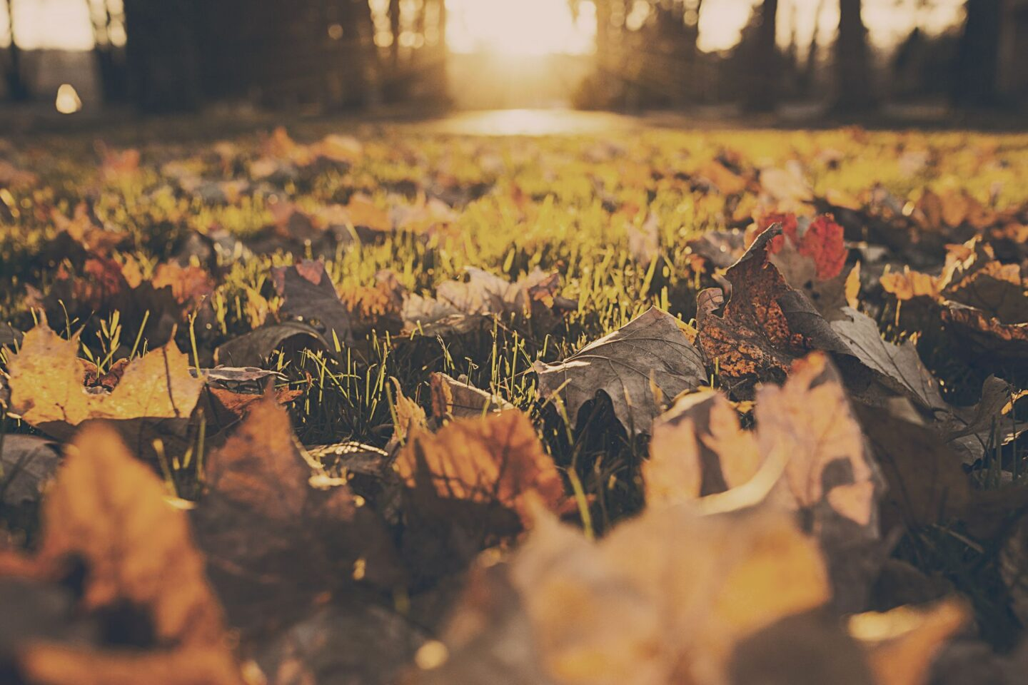 Get ready for Autumn | Home and Garden